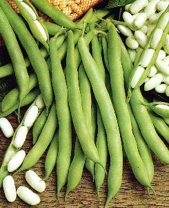 photo-white-beans-and-pods